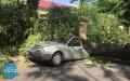 Drzewo zmiażdżyło auto